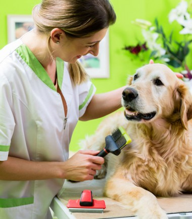 formation a distance assistant veterinaire