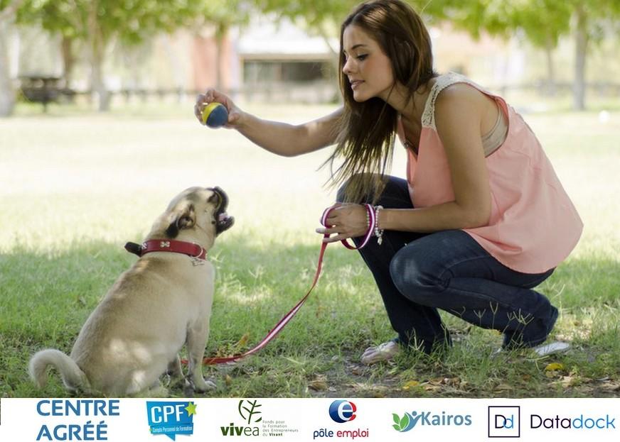 formation a distance educateur canin
