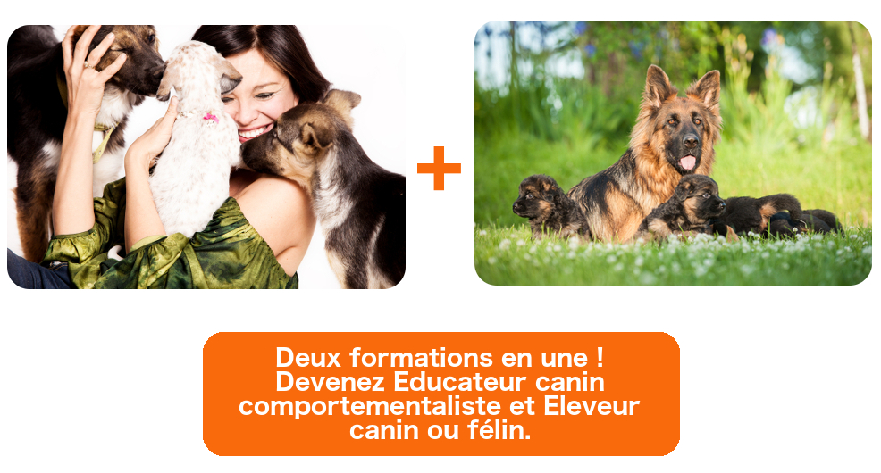 formation a distance eleveur canin