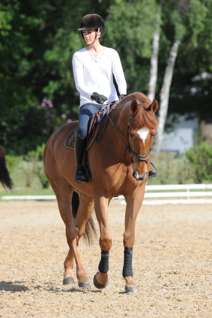 formation a distance equitation