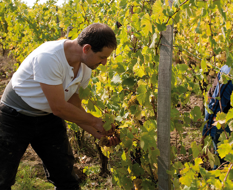 formation a distance viticulture oenologie