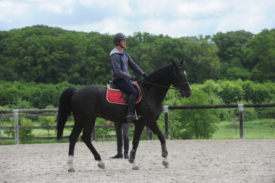 formation remuneree equitation