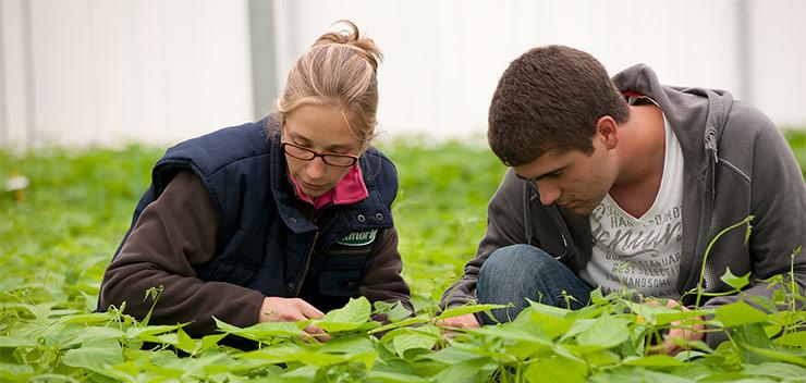 formation remuneree horticulture